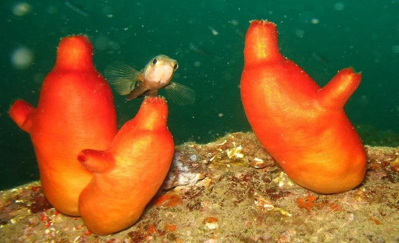 Punya Masalah Gigi Sensitif? Hewan Laut Ini Solusinya!