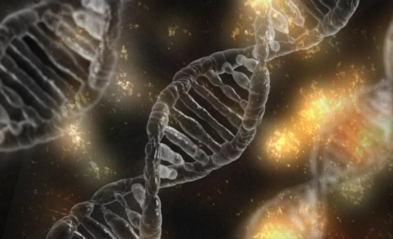 Aplikasi Teknik PCR Dalam Kehidupan