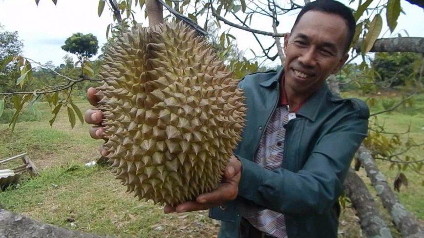 Go Green Dengan Plastik Biji Durian