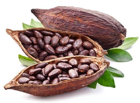 Cara Menanam Pohon Cokelat Yang Baik dan Benar