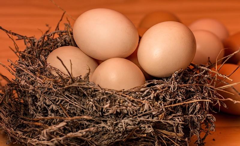 Mengenal Manfaat Dan Kandungan Dari Telur Ayam