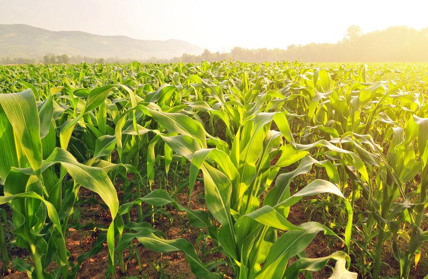 Pestisida kimia tidak hanya menyebabkan kerusakan lingkungan tetapi juga dapat meninggalkan residu pestisida pada bahan pangan yang berbahaya pada kesehatan.