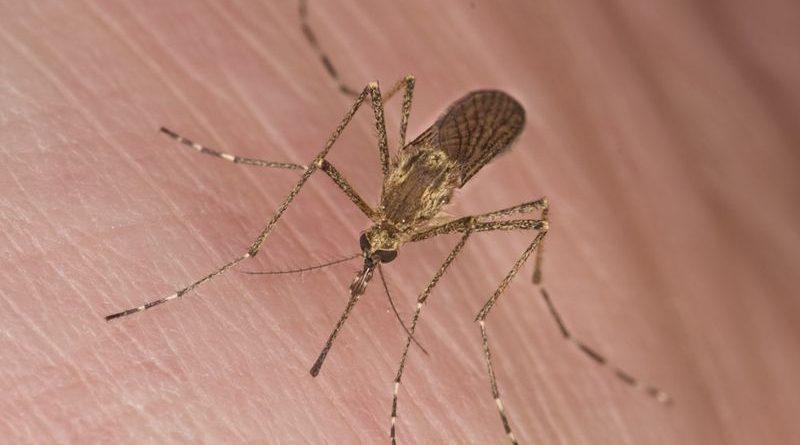 Kenapa Nyamuk Lebih Menyukai Menghisap Darah Orang-orang Tertentu?
