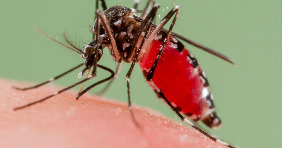 AS Setujui Pelepasan Nyamuk Pembunuh di 20 Negara Bagian