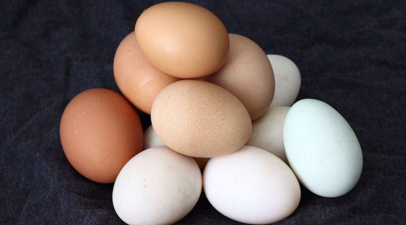 Mengapa Mengkonsumsi Telur Mentah Tidak Baik untuk Kesehatan?