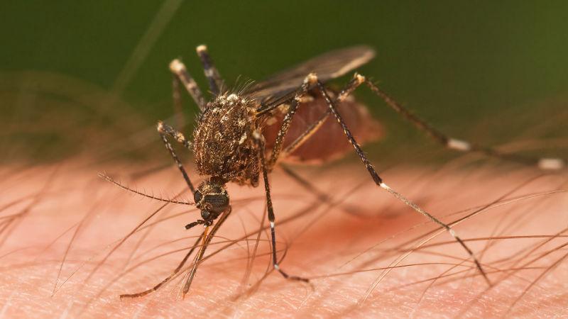 Aplikasi Mobile untuk Mendekteksi Nyamuk Penyebab Malaria