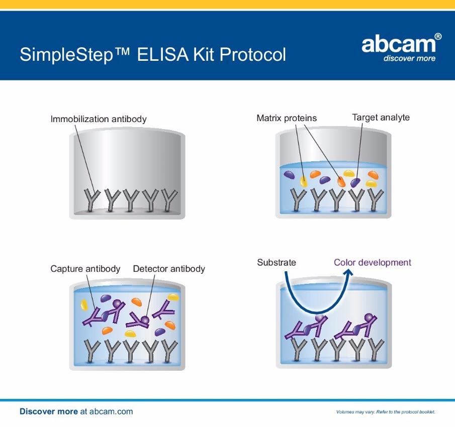 Simple Step ELISA Kit - Abcam